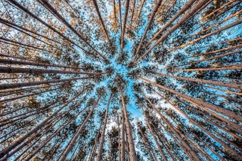 forest-1245951_1920.jpg