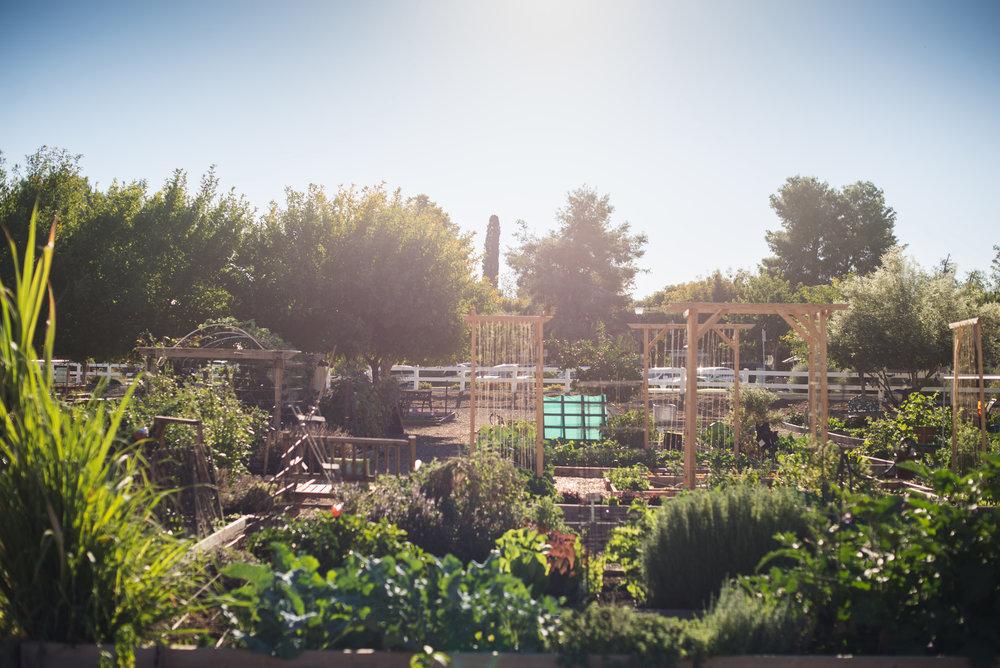morning garden-1.jpg