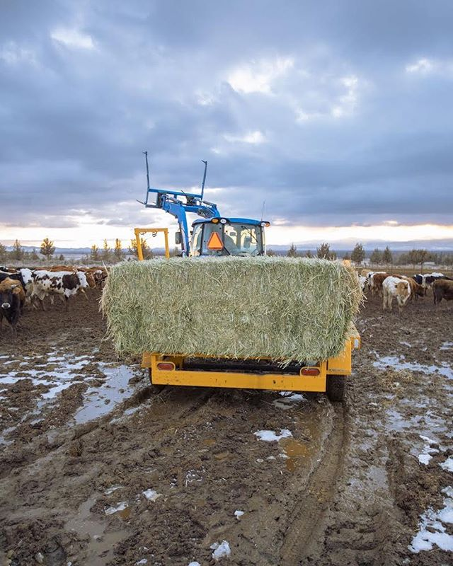 Automatic hay trailer=MUCH cleaner muck boots