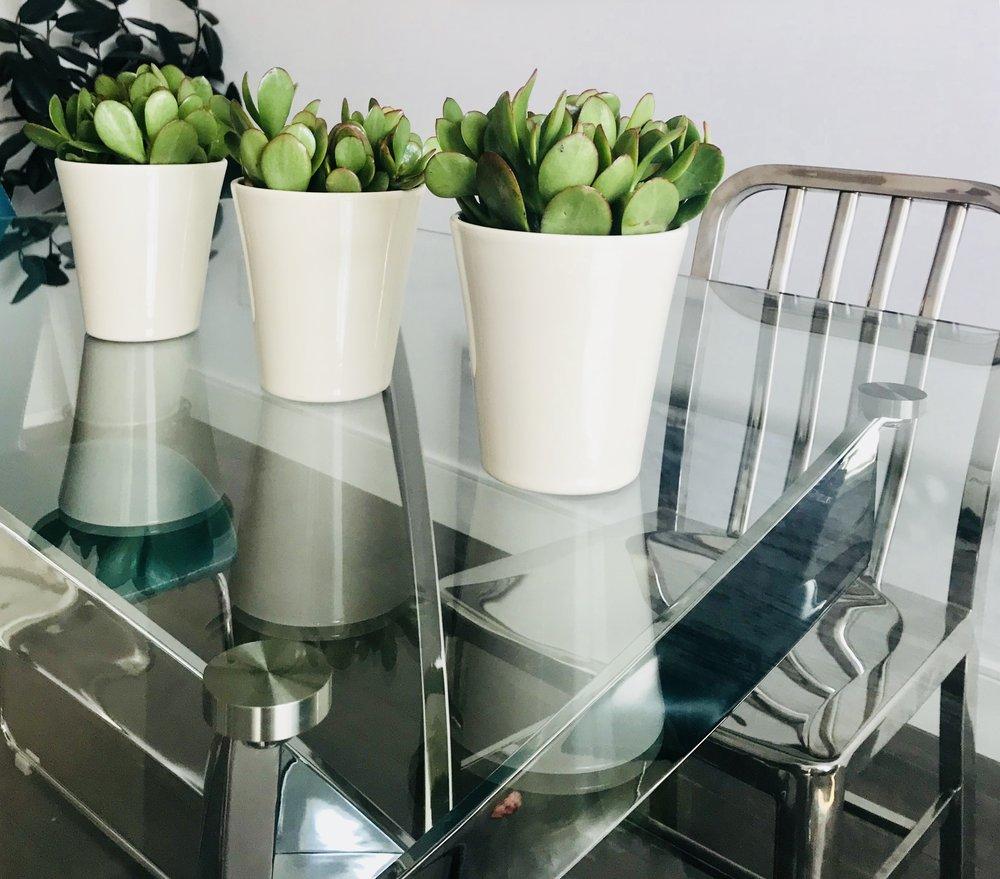 Modern-Minimal-Dining Room Design-Glass Dining Table-Money Plants-Dining Table Accessories-Style Maven Decor-Edmonton Canada