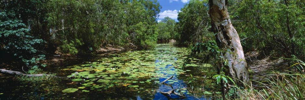 Pond of Life