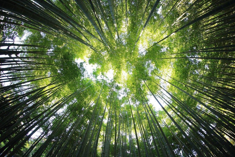 bamboo-looking-up-circle-kazuend-30877-unsplash.jpg