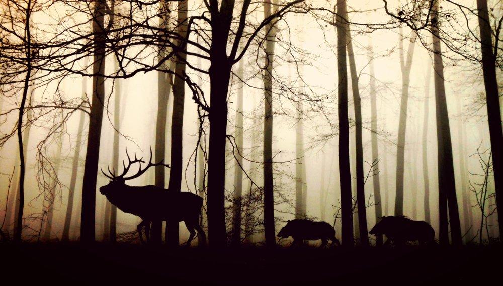 Auch Greenpeace meint: Wildfleisch ist fair, frei und gesund!