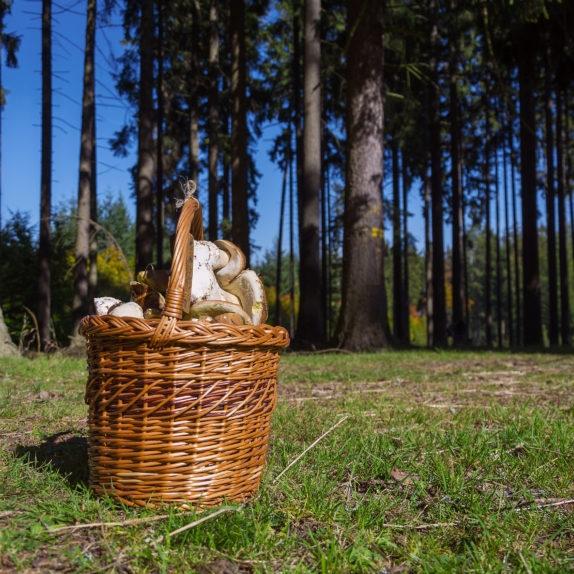 Full Basket.jpg