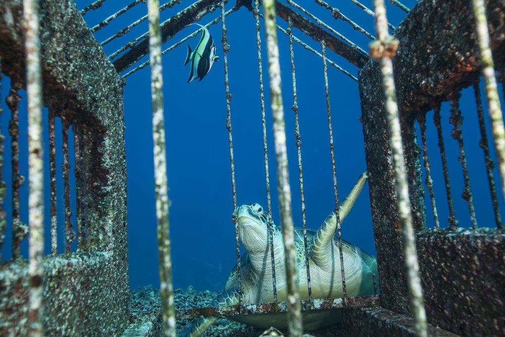 Sea turtle at Gili Trawangan with Lacadives dive travel