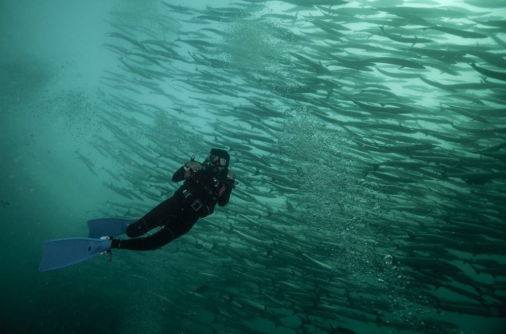 Diver enjoying the schooling fish at Sipadan with Lacadives dive travel