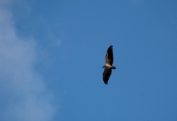 Things to do in Andamans - Birdwatching