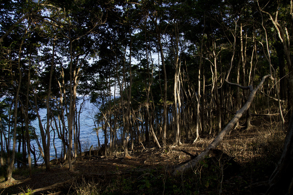 Things to see in Andamans - Mahatma Gandhi Biological park