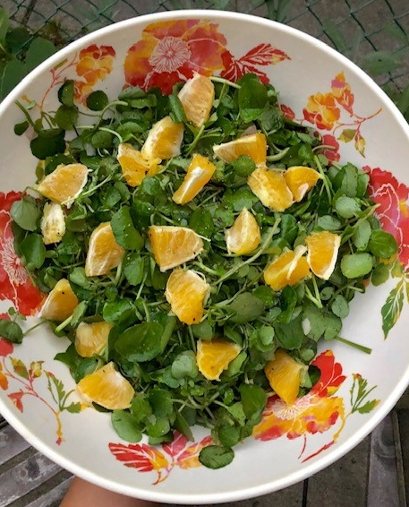 salad maddy.jpg