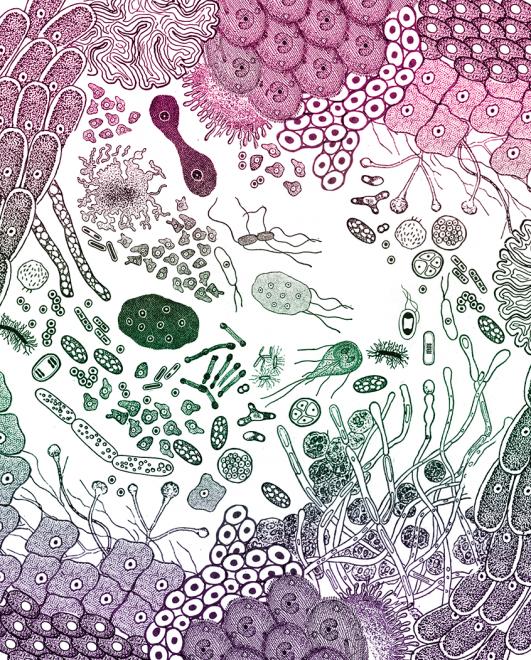 illustration by Casie Wilson