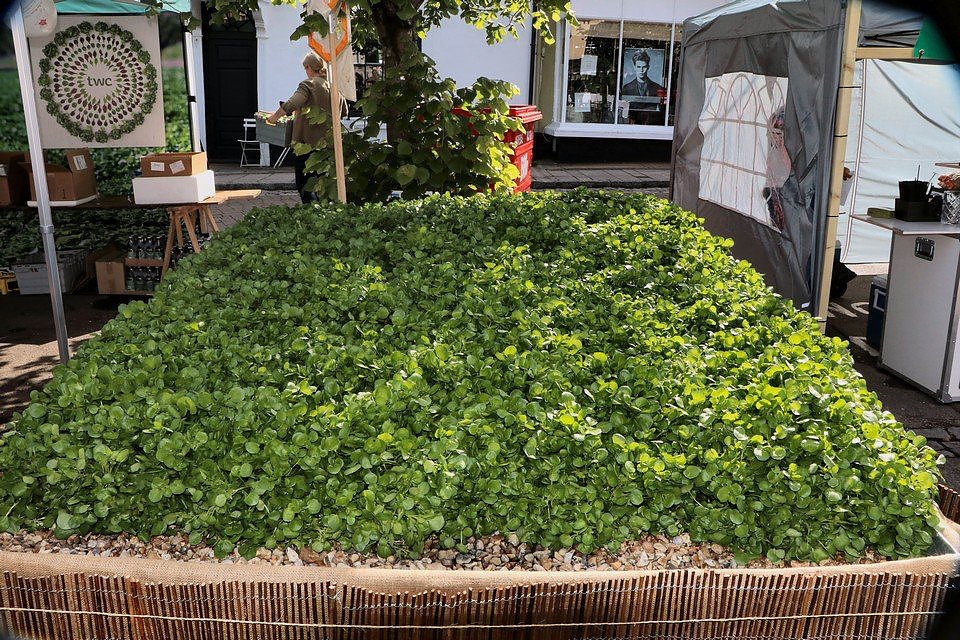 tableOfWatercress.jpg