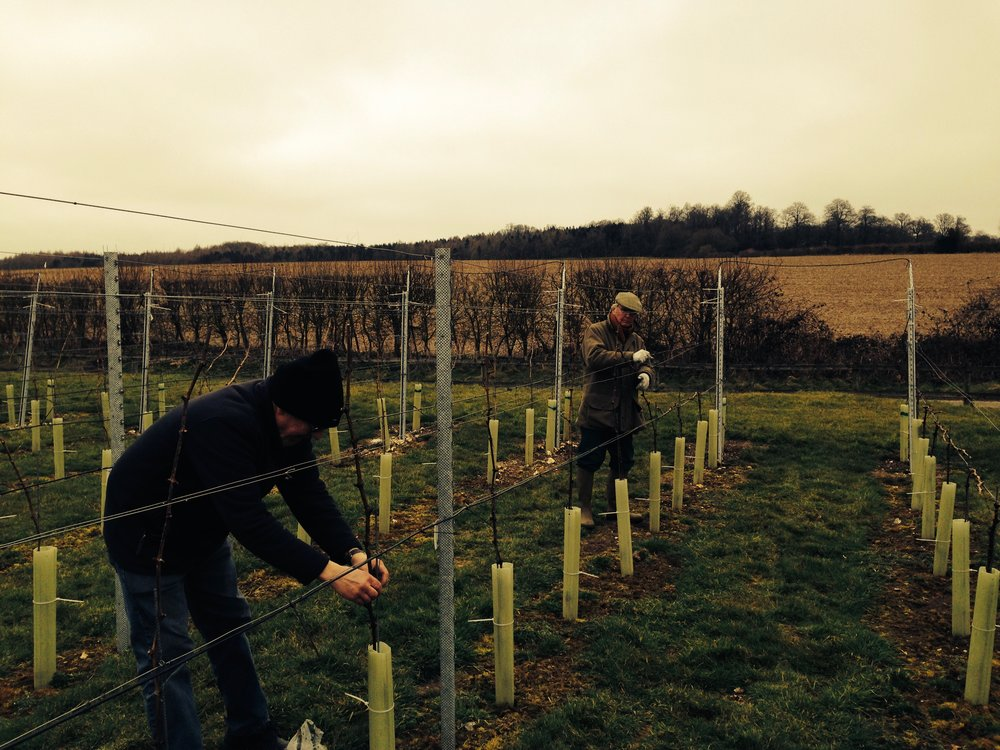 Winter pruning in January