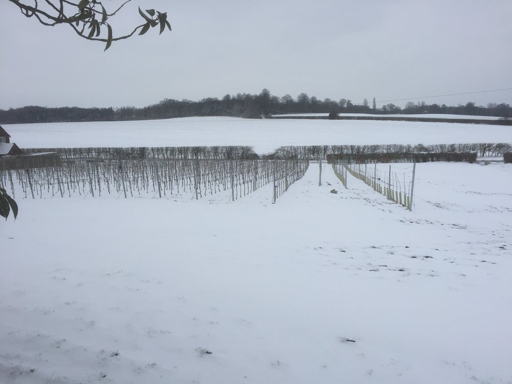 A blanket of snow - February