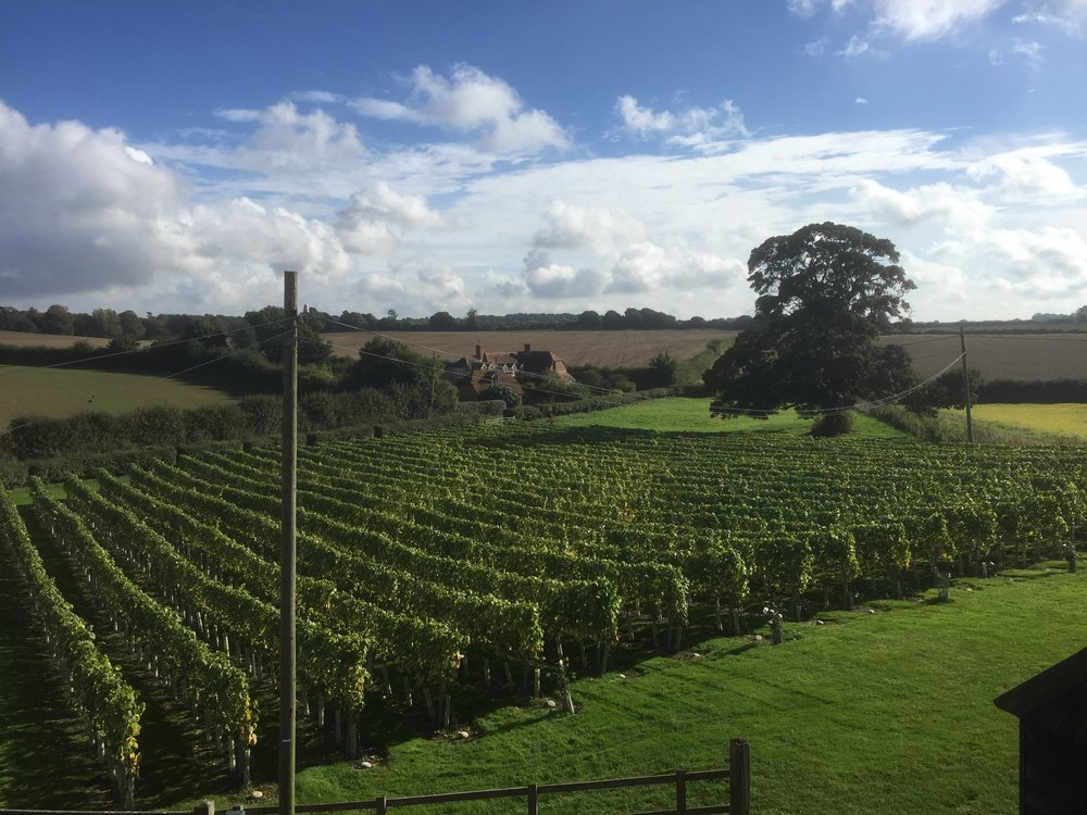 Military lines of chardonnay - September