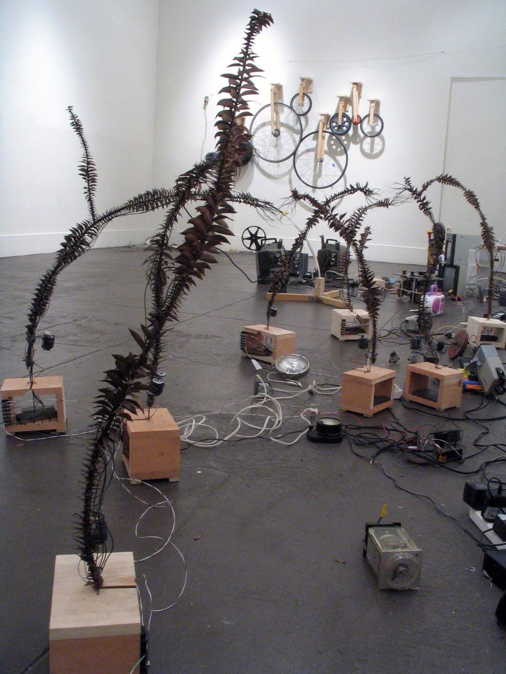 View of part of the installation on right side of room. Pairs of stiff plant branches meet each other with bristling bare copper wires. As the wires touch, they complete the electrical circuit that triggers vibrating motors attached to each branch.