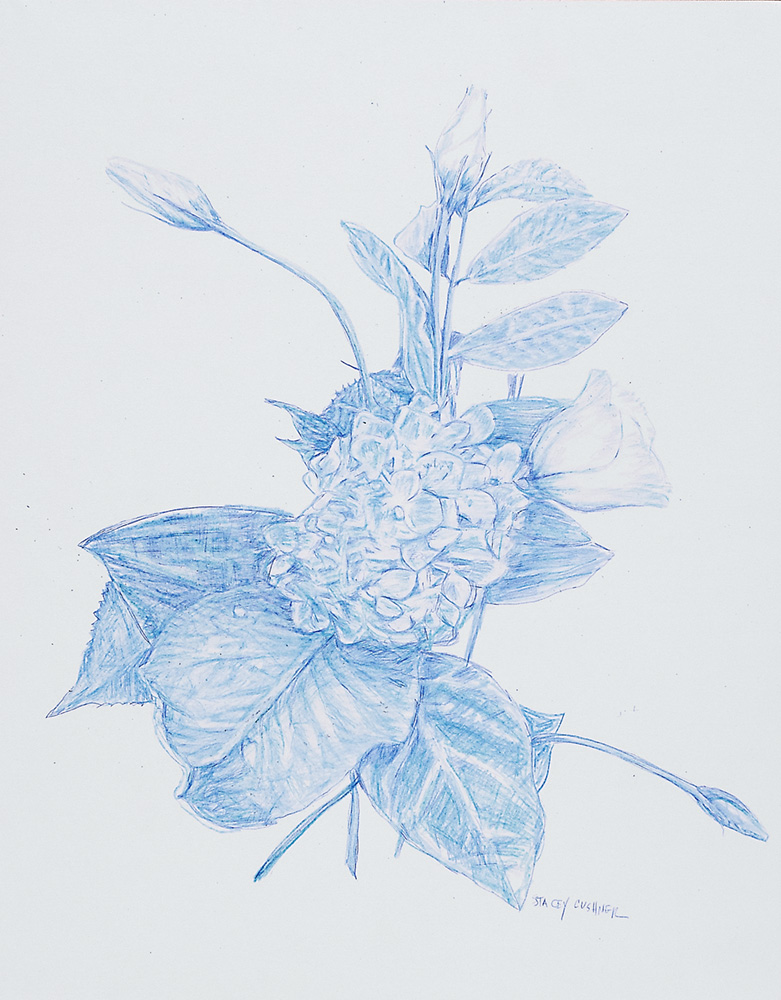 Botanical 4 Blue Pencil on Arches Paper 11 x 14 inches 2018