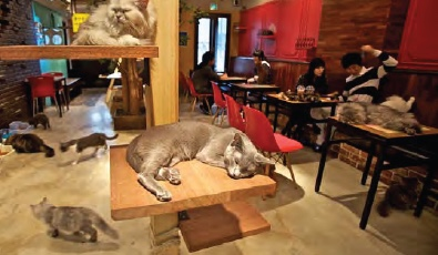 6 Cat Cafe.jpeg