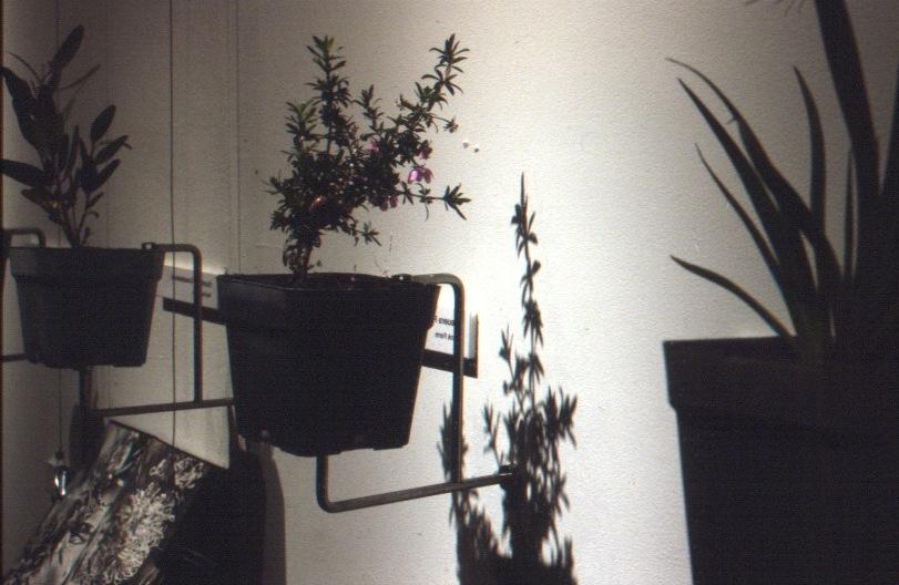 RA-6-Plants-Detail.jpg