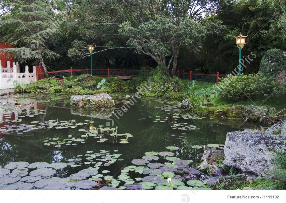 chinese-pond-stock-picture-119102.jpg