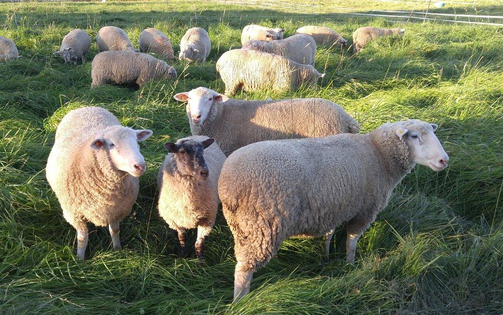 Beautiful ladies on productive fall pastures. Still plenty of grass!