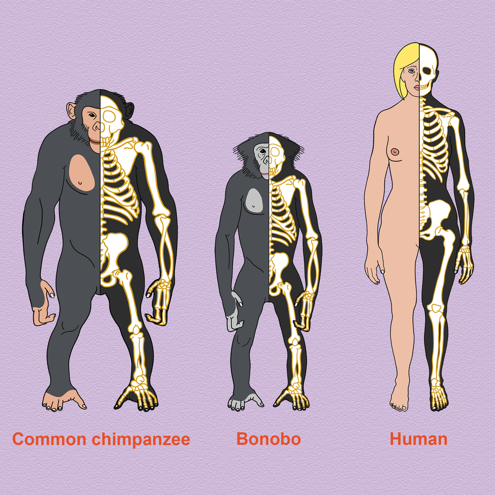 How do we compare to our closest relatives? -