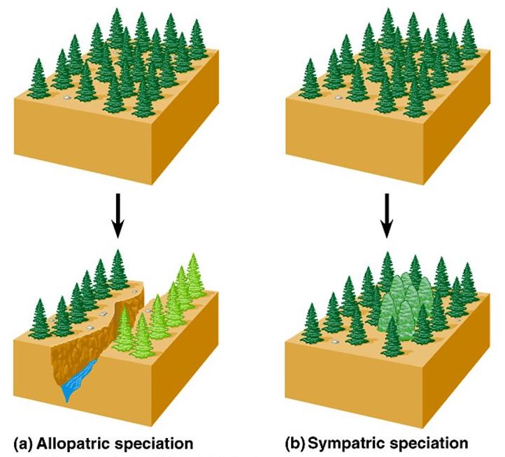 Allopatric speciation vs Sympatric speciation.jpg