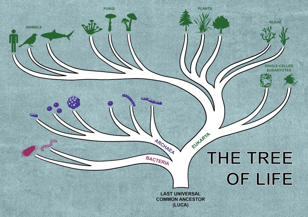 tree of life with icons blue background.png
