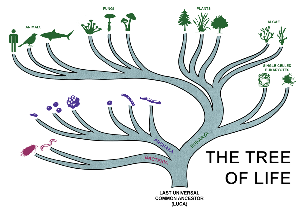 tree of life with icons no back.png