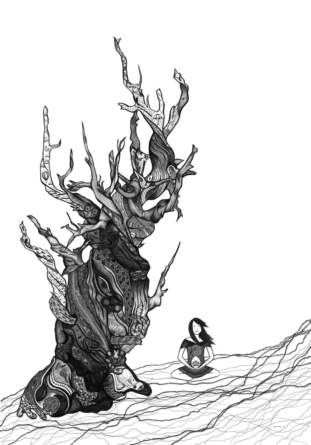 Methuselah Tree Janine Strong.jpg