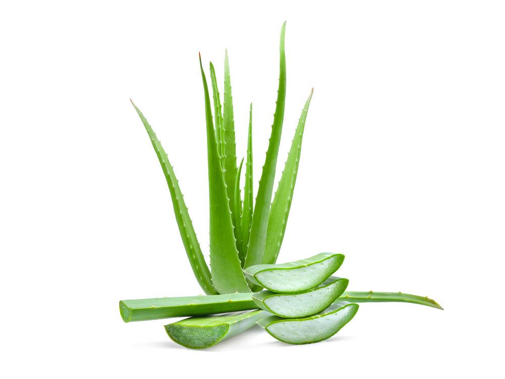 Ah-Shi Beauty Aloe Vera