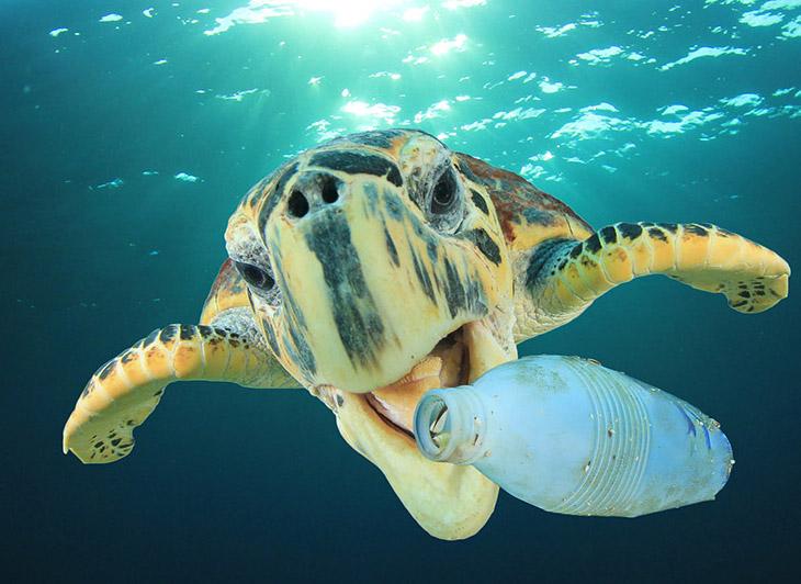 bigstock-Plastic-pollution-problem-Sea-228731458.jpg