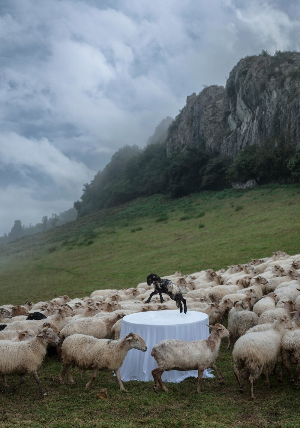 mugaritz_1808__0049_meck_flat_5_sheep_FINAL.jpg