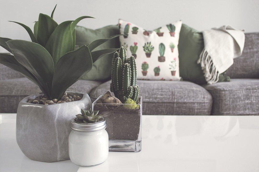 house+plants.jpg