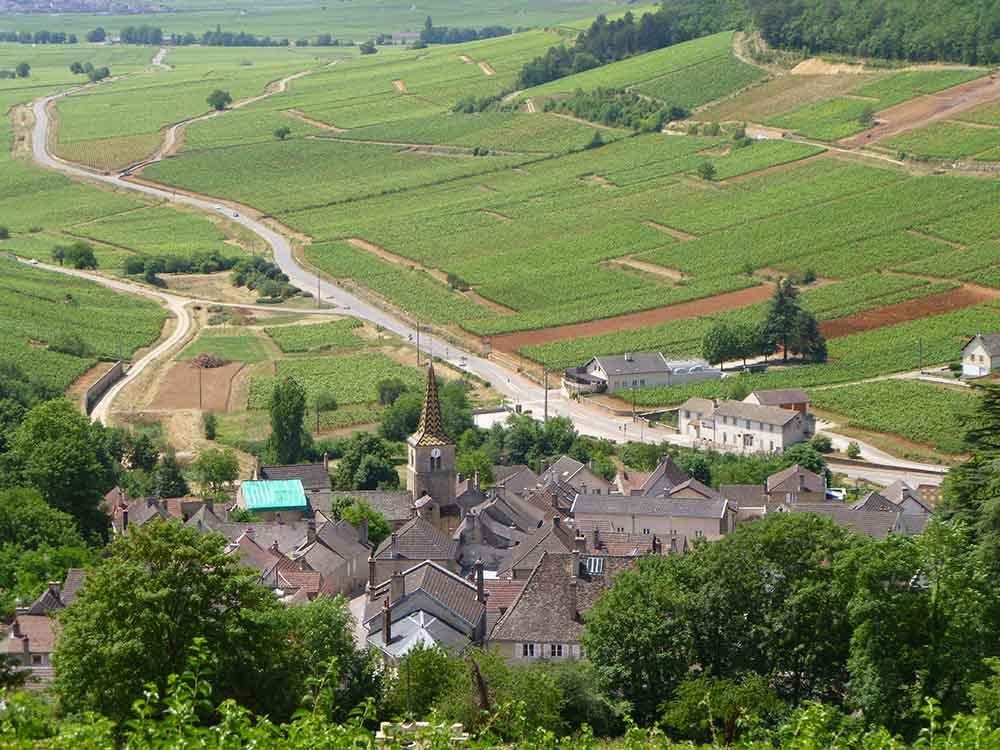 Pernand Vergelesses Burgundy.jpg