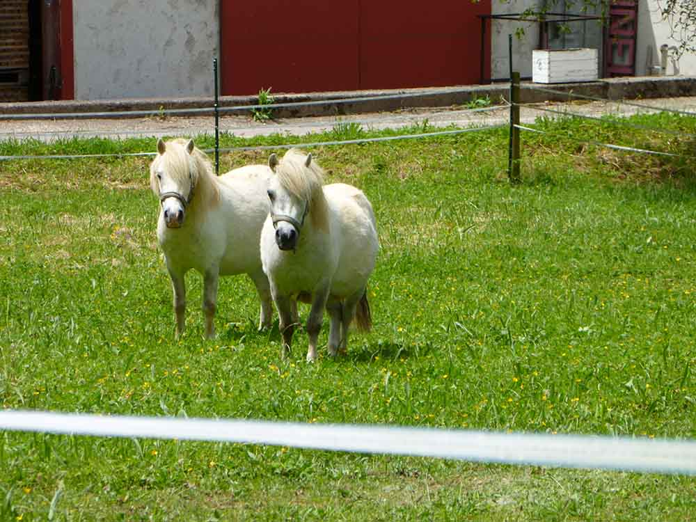 Ponies Near St Romain Burgundy.jpg
