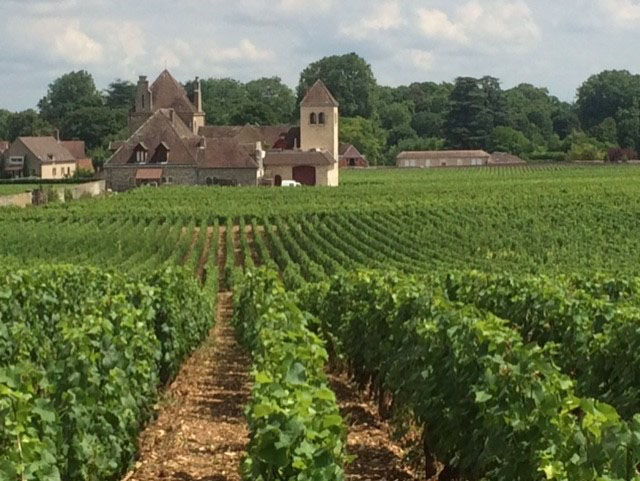 French-vineyard-wine-confidante-trip.jpg