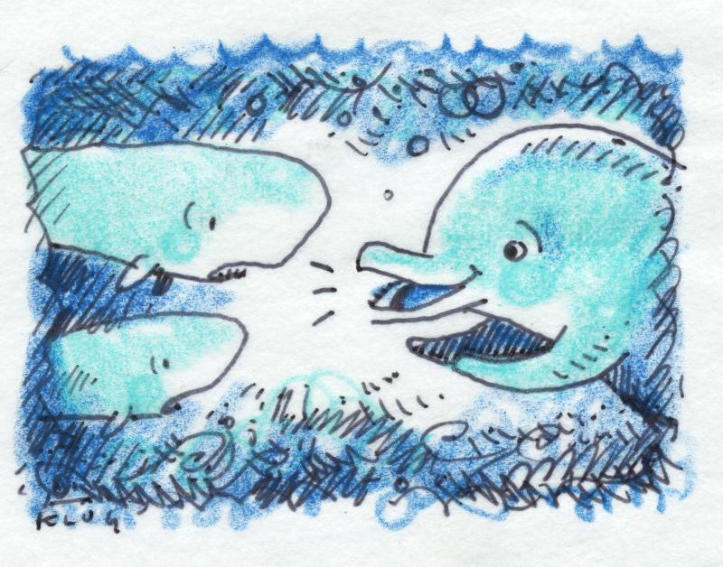 pygmy whale.jpg