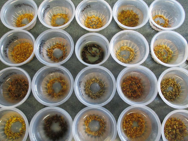sherck-seeds-2.jpg