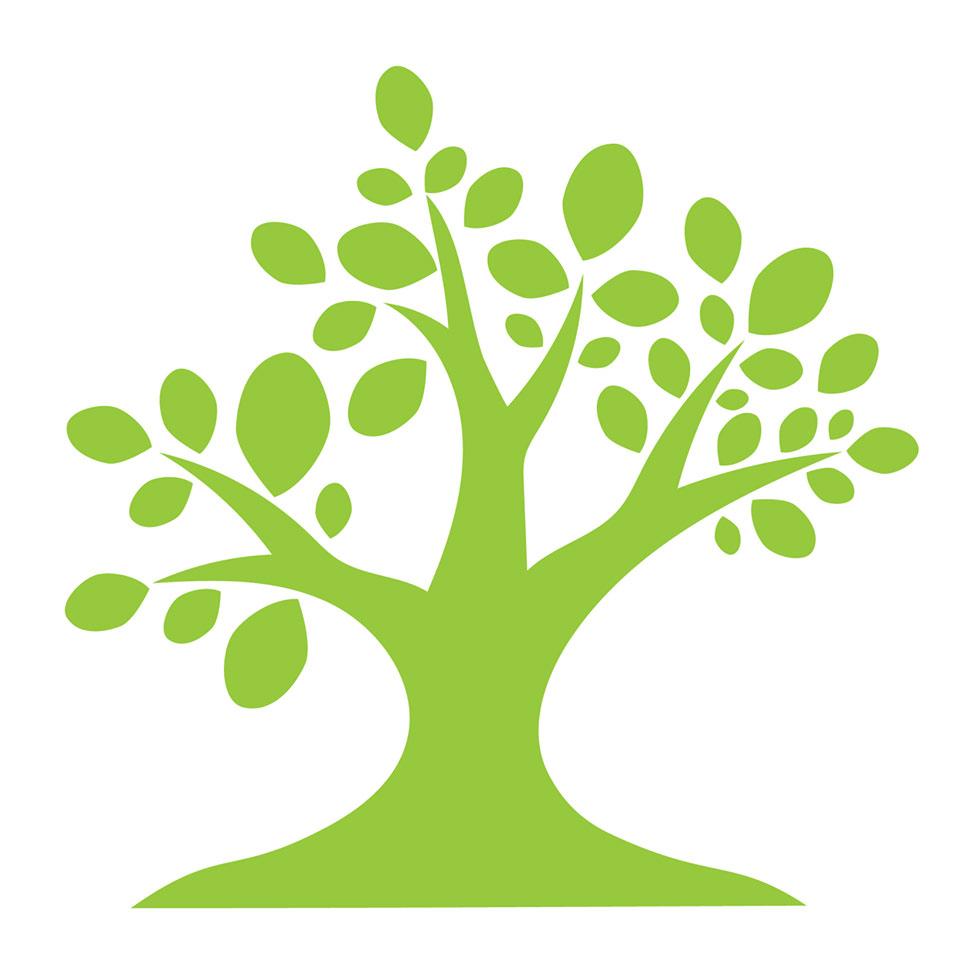 the-moringa-tree-2.jpg