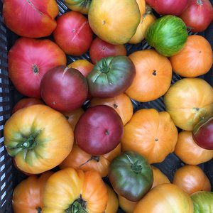 Sign up for a local CSA this year! — Elkhart County Food Council