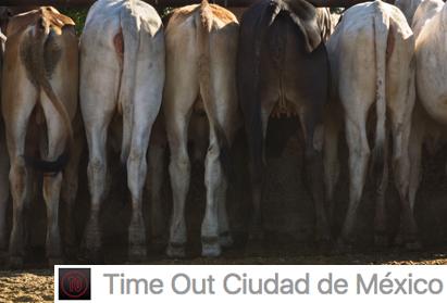 POSPUESTA. ¿Por qué el velociraptor se convirtió en gallina? - Time Out México | Domingo 13 agosto 2017