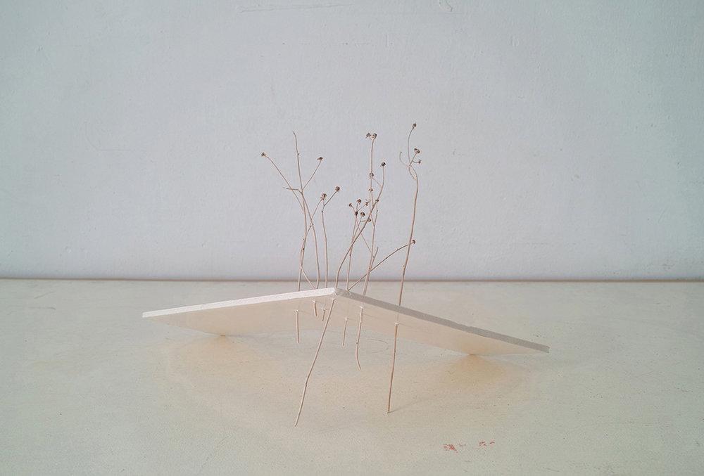 Sin Título  De la serie Jardín. Inyección de tinta sobre papel algodón 44 x 55 cm FECHA