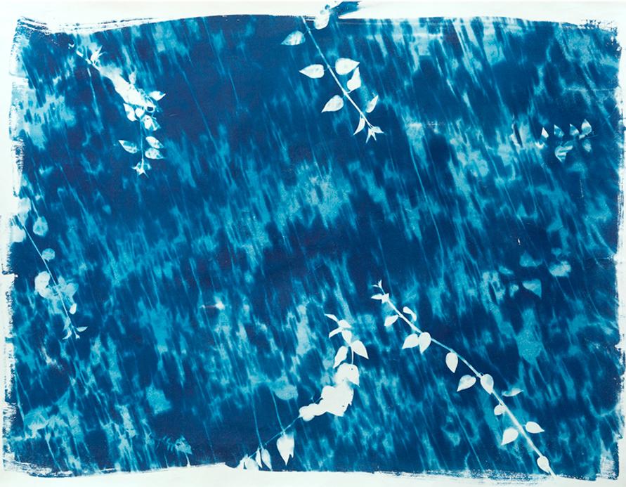 Bajo el Jazmín . Cianotípia sobre papel algodón 100 x 130 cm