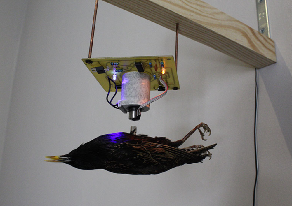 Second Wind , Levitation electronic device and dissected bird with magnet.20 x 20 x 36 cm Unique Edition (Serie of 9 + 2 AP) 2010