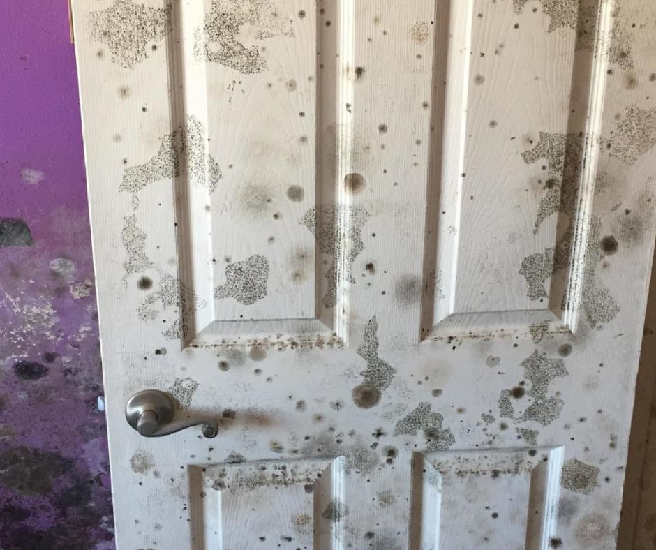 bedroom door covered in mold