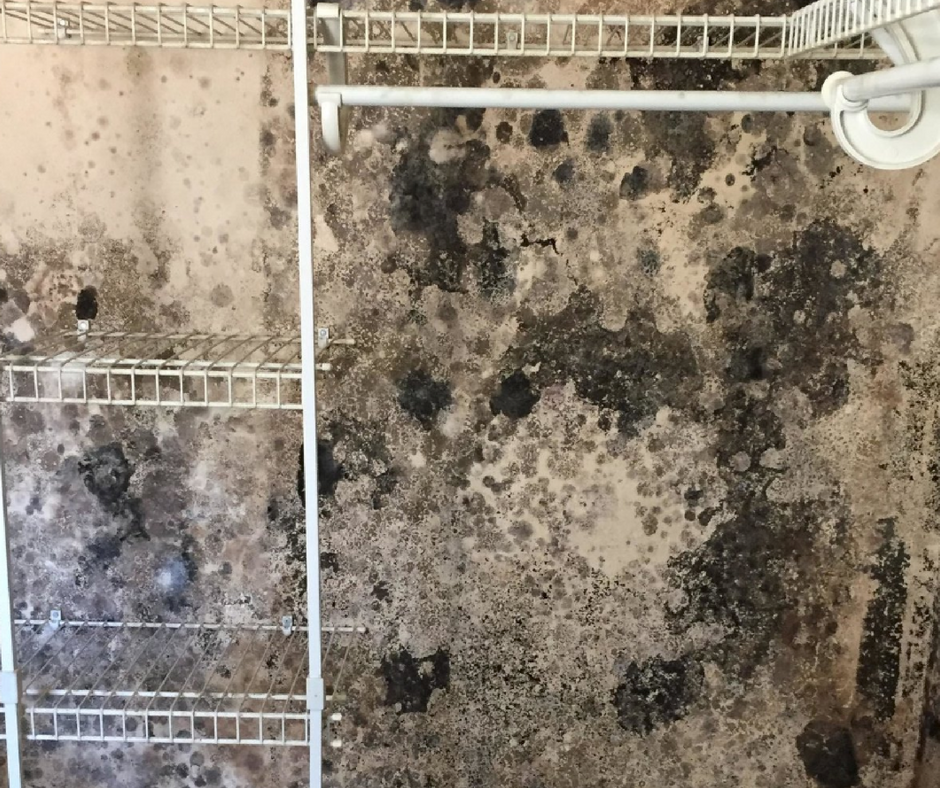 closet covered in mold