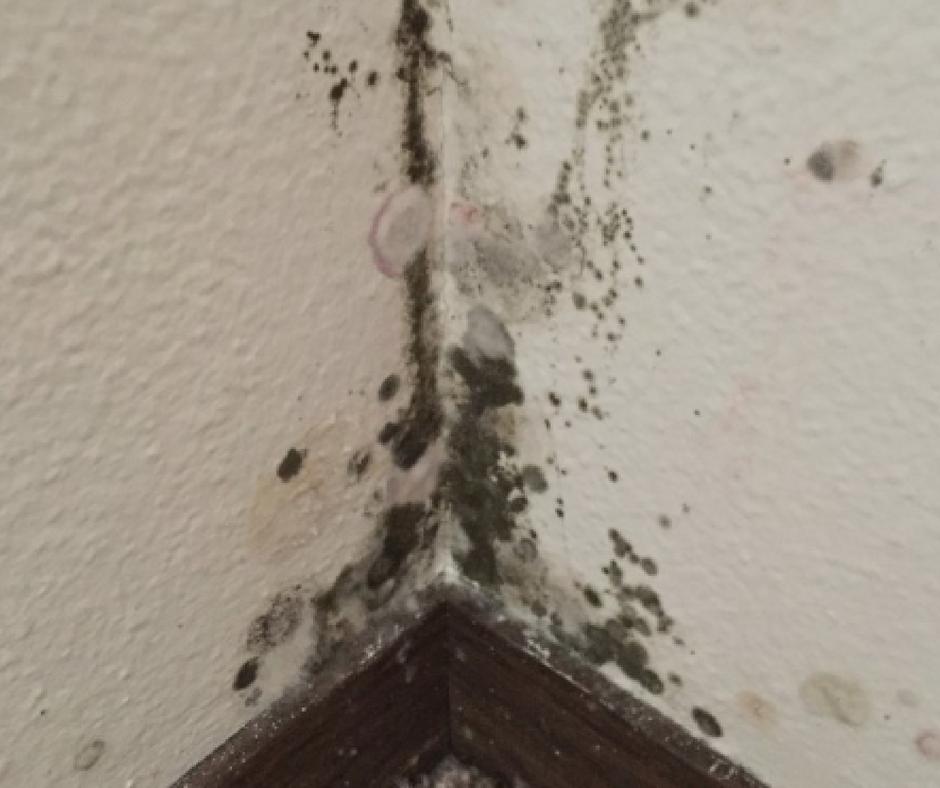 black mold bedroom corner
