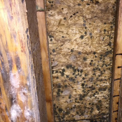 crawl space damage from mold growth