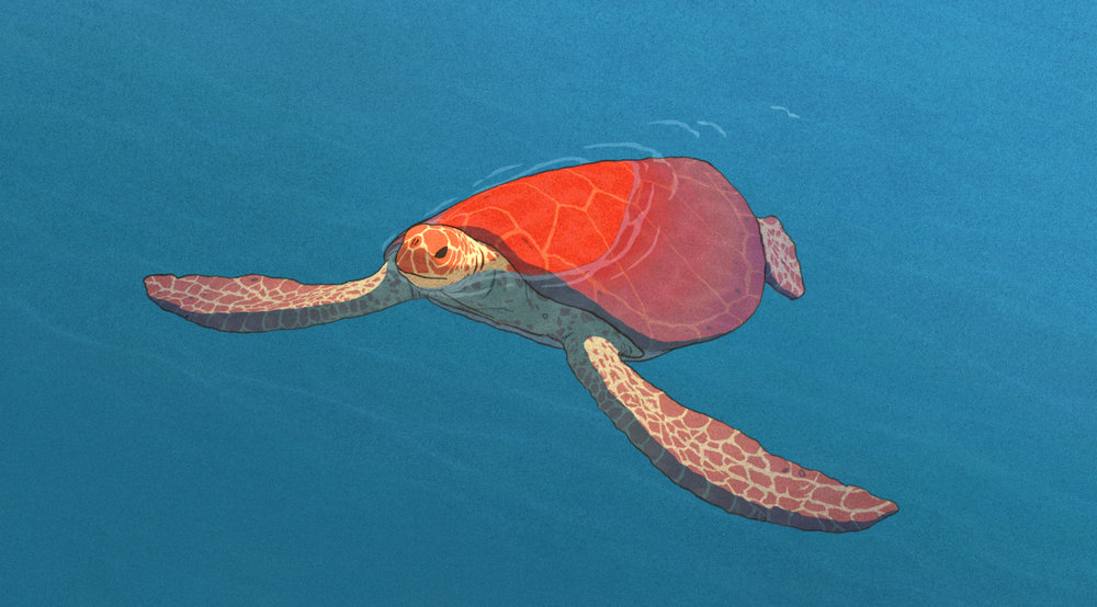 The Red Turtle - December