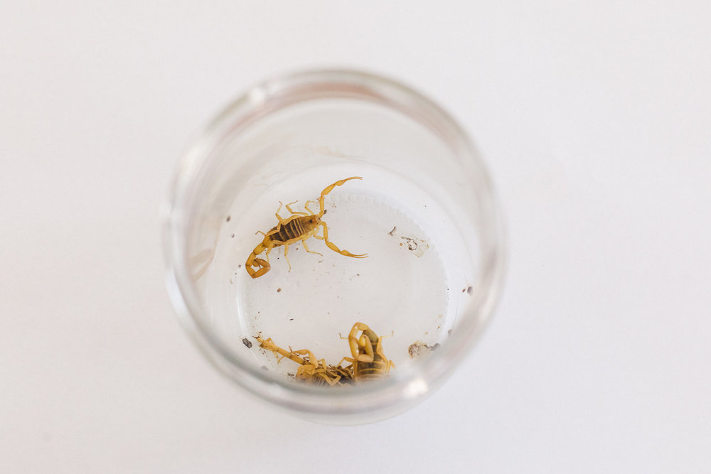 scorpion control.jpg
